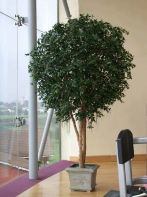 Artificial Indoor Plants | Silk Plants | Artificial Hedges ...
