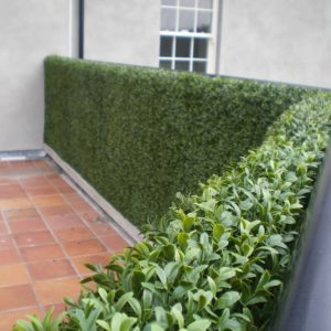 artificial plants | artificial outdoor hedging | outdoor scene