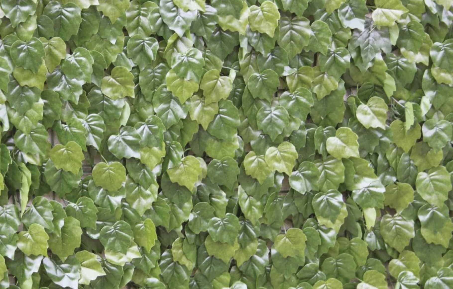 Wonderwal artificial hedge screening tile virginia creeper for Outdoor wall coverings garden