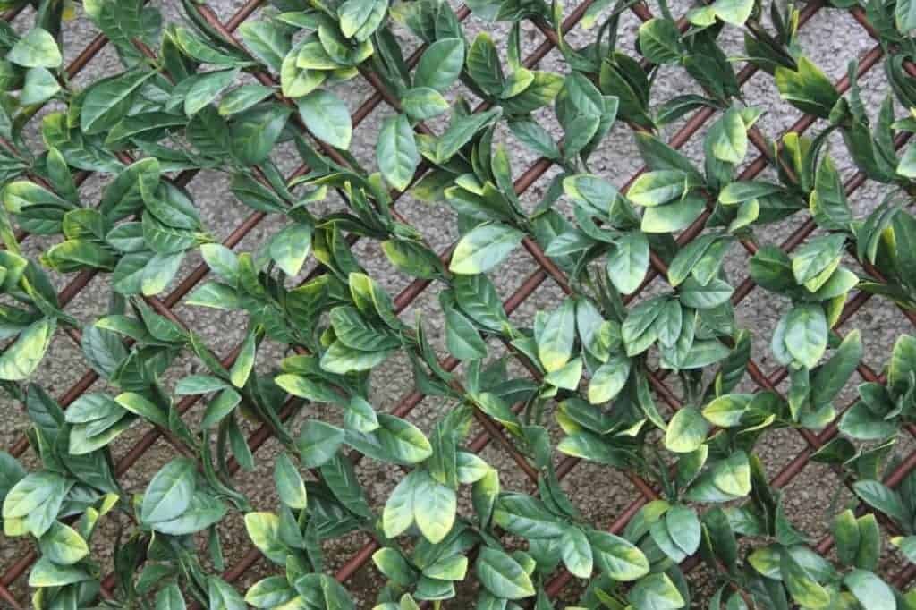 Artificial Hedge Wall Coverings Artificial Hedge Screening Trellis Laurel Leaf Outdoor Ie