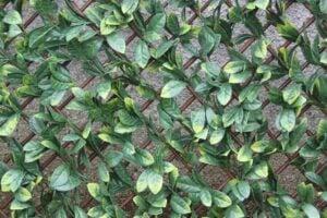 WonderWal Artificial Hedge Screening Trellis Laurel Leaf