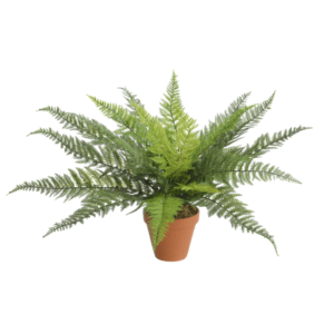 leather fern bush - artificial plants for sale dublin