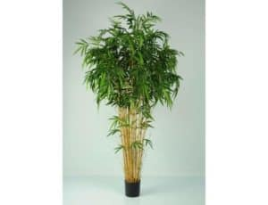 Bamboo Natural Tree *COLLECTION ONLY*