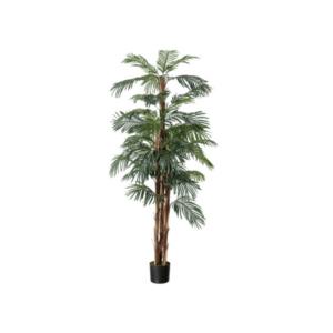 Kenya Palm 5ft Tree