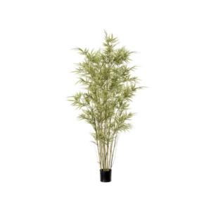 Royal Bamboo Tree 4ft